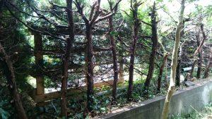 庭木の伐採から処分まで